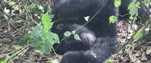 3 Days Uganda Gorilla Safari to Bwindi Impenetrable National Park