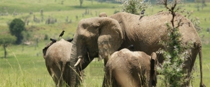 8 Days Uganda Safari Wildlife Safari