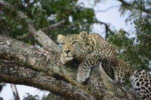 Africa Wildlife Safaris
