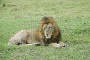 14 Days Tanzania Wildlife Safari