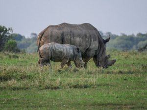 14 Days Kenya Wildlife Safari Tour