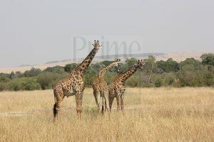 kenya safari tour