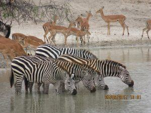 Namibia Safari Tour Destinations