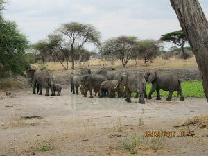 Serengeti National Park 12 Days Tanzania Safari