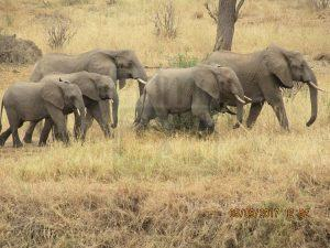 7 Days Wildlife Kenya Safari Tour