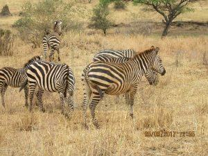 Mahango National Game Reserve