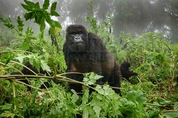 15 Days Gorilla Safari Uganda Tour