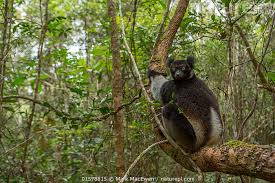 Madagascar Safaris Tours