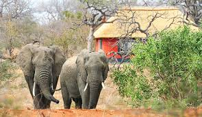 5 Days Camping Safari Kruger Park South Africa