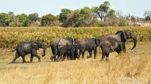 Namibia Safari Attractions