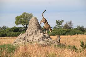 14 Days Best of Botswana Safari