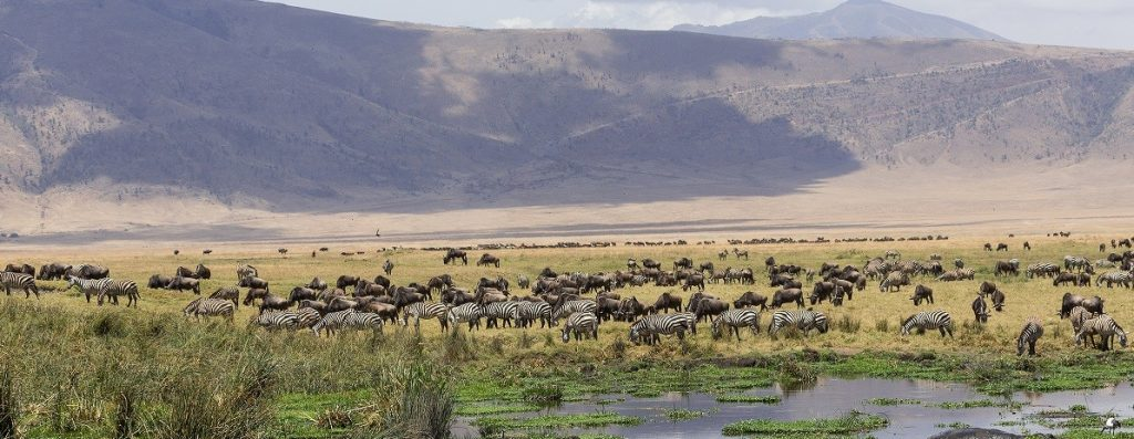 10 Days Tanzania Safari