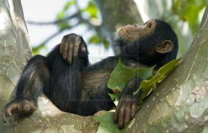 5 Days Rwanda Wildlife & Chimpanzee Safari