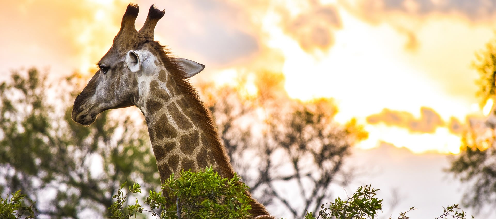 south africa safari tours, 14 Days Comprehensive Safari