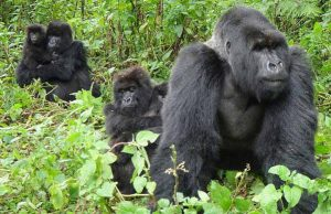 Congo Safaris Tours 21 Days Uganda Birding Safari Tour in Africa