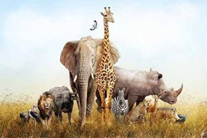 South Africa Wildlife safaris