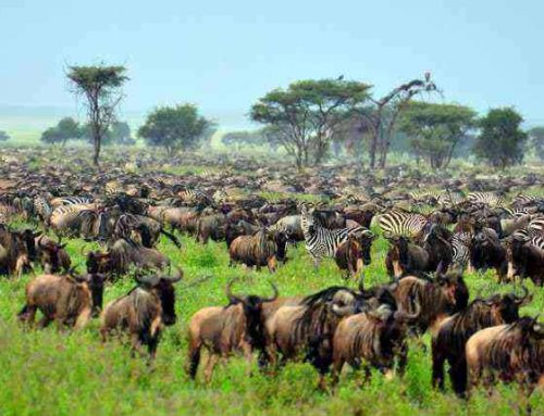 Explore the cradle land of Africa with an Africa safari to East Africa