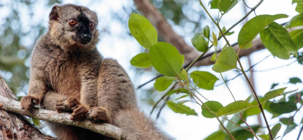 9 Days Madagascar Safaris Tour