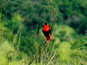 14 Days Uganda Birding Safari Tours