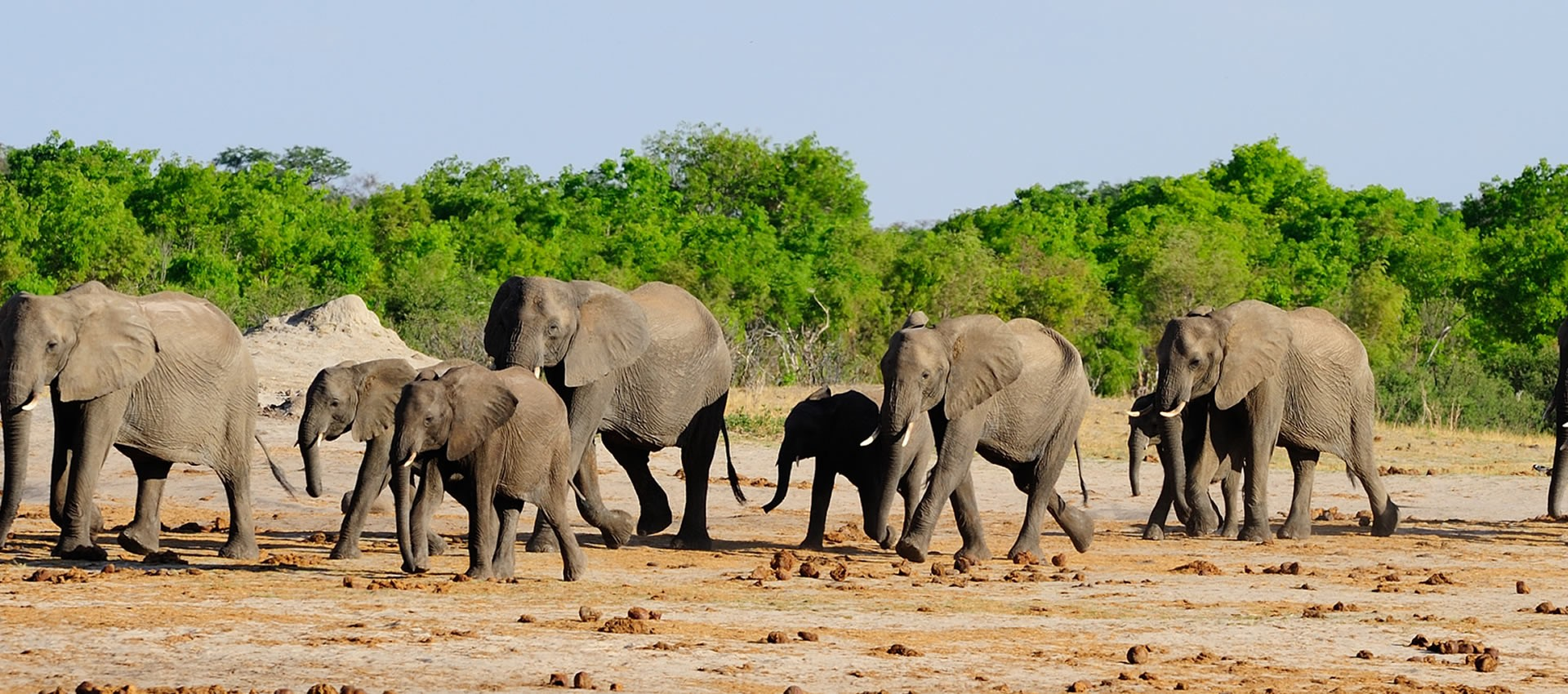 Africa Safaris Tours krugar national park