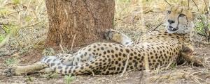 5 Days Murchison Falls wildlife Safari Uganda Gorilla Safari Bwindi