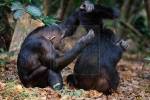 9 Days Gorilla Trekking Safari Rwanda Wildlife Safaris Tour