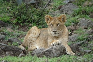 14 Days Kenya Wildlife Safari Tour