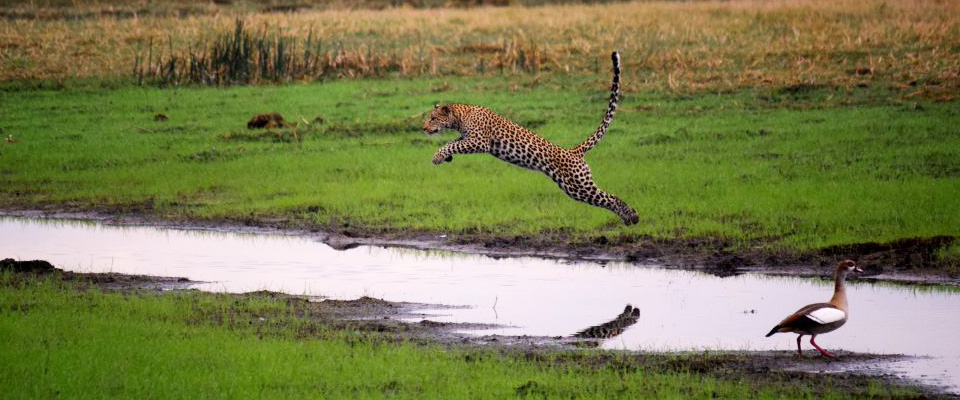 10 Days Wildlife Safari