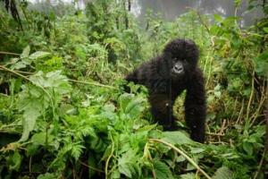 8 Days Uganda Safari Wildlife Safari