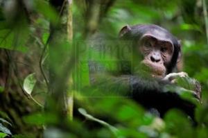 5 Days Uganda Gorilla Safari & Chimpanzee Trekking Uganda Tour
