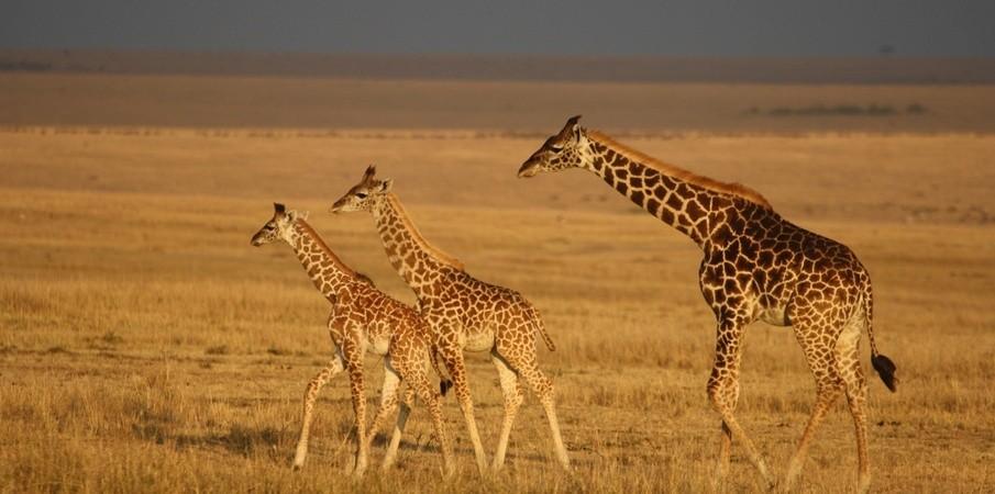 Best Selling Namibia Wildlife Safaris