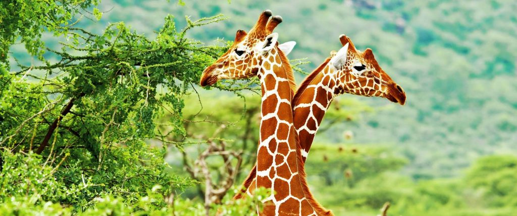 3 Days Kruger Park Safari in South Africa