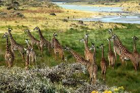 13 Days Safari in Tanzania