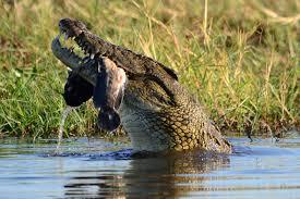 8 Days Botswana Safari