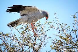 21 Days Uganda Birding Safaris Tour in Africa