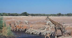 6 Days Wildlife Safari Namibia