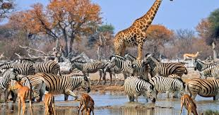 A Tanzania safari to Arusha National Park-Tanzania Safari News