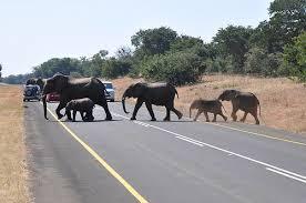 3 Days Botswana Wildlife Safari