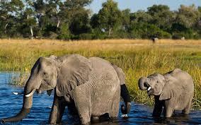 12 Days Camping Safari Botswana