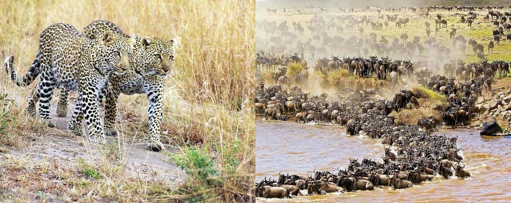2 Days Short Masai Mara Kenya Safari