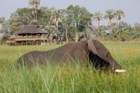 10 Days Wildlife Safari, 12 Days Camping Safari Botswana