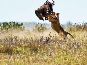 South Africa Wildlife safaris