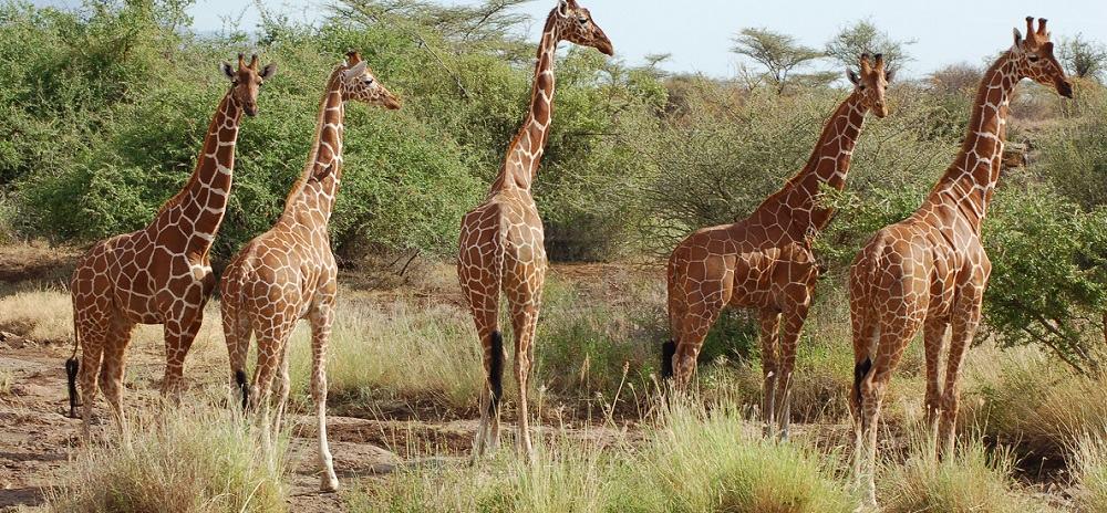 4 Days Tanzania Wildlife Safari