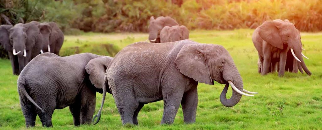 12 Days South African Luxury Safari Expedition