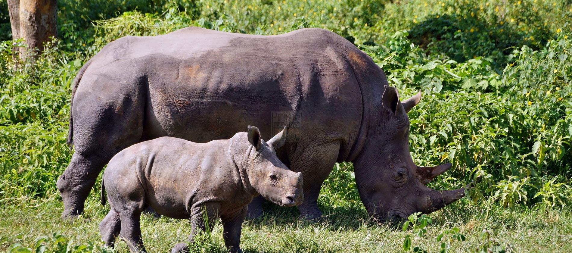 3 Days Rwanda Wildlife Safari Akagera National Park