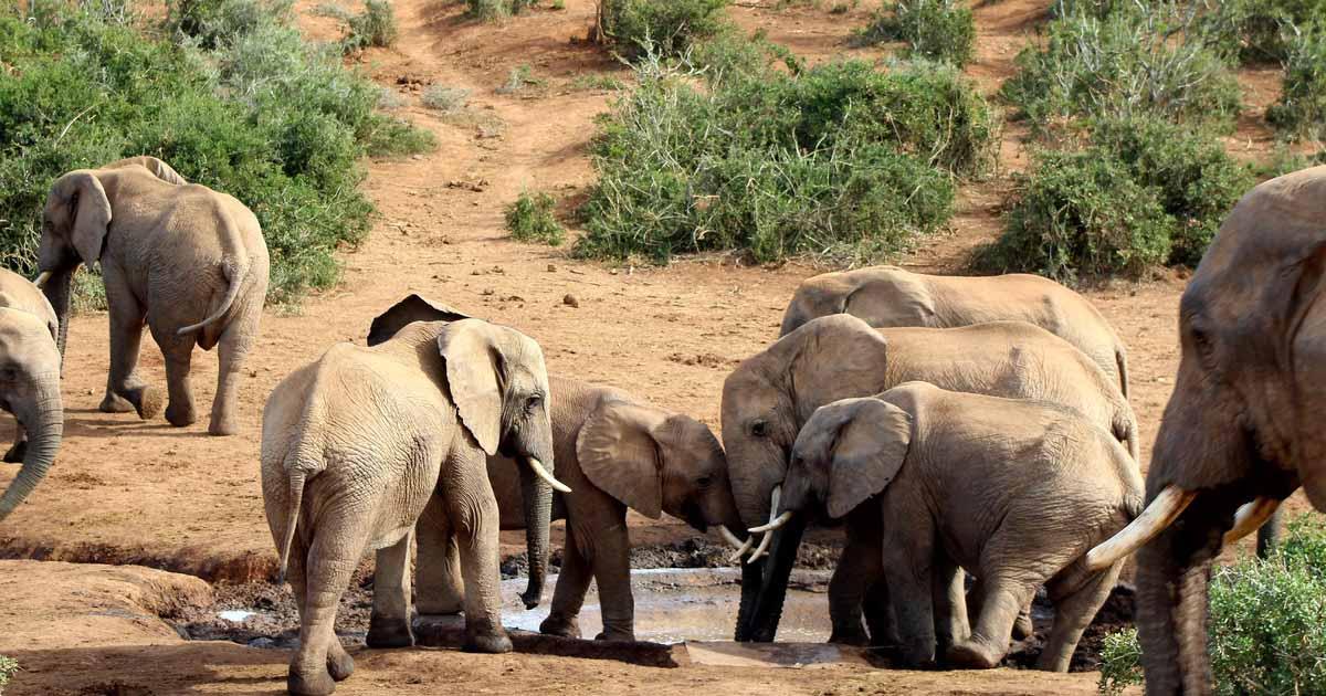 A Tanzania safari to Arusha National Park