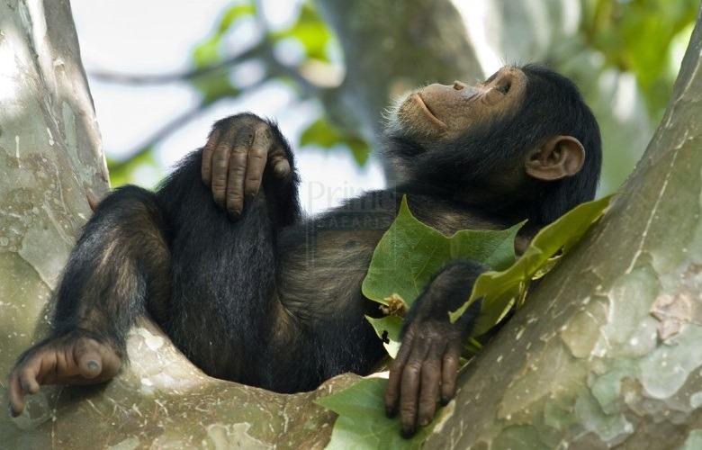 3 Days Rwanda Chimpanzee Safari