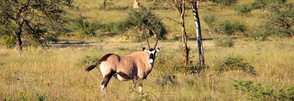 10 Days Namibia Wildlife Safari