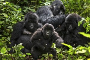 Congo Safaris Tours