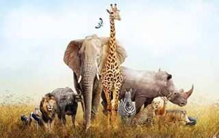 South Africa Wildlife safaris 3 Days Kruger Park Safari in South Africa